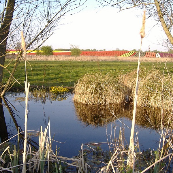 Der kleine Bach zwischen den beiden Seen führt im Frühjahr viel Wasser. Im Hintergrund Tulpenfelder in allen Farben!