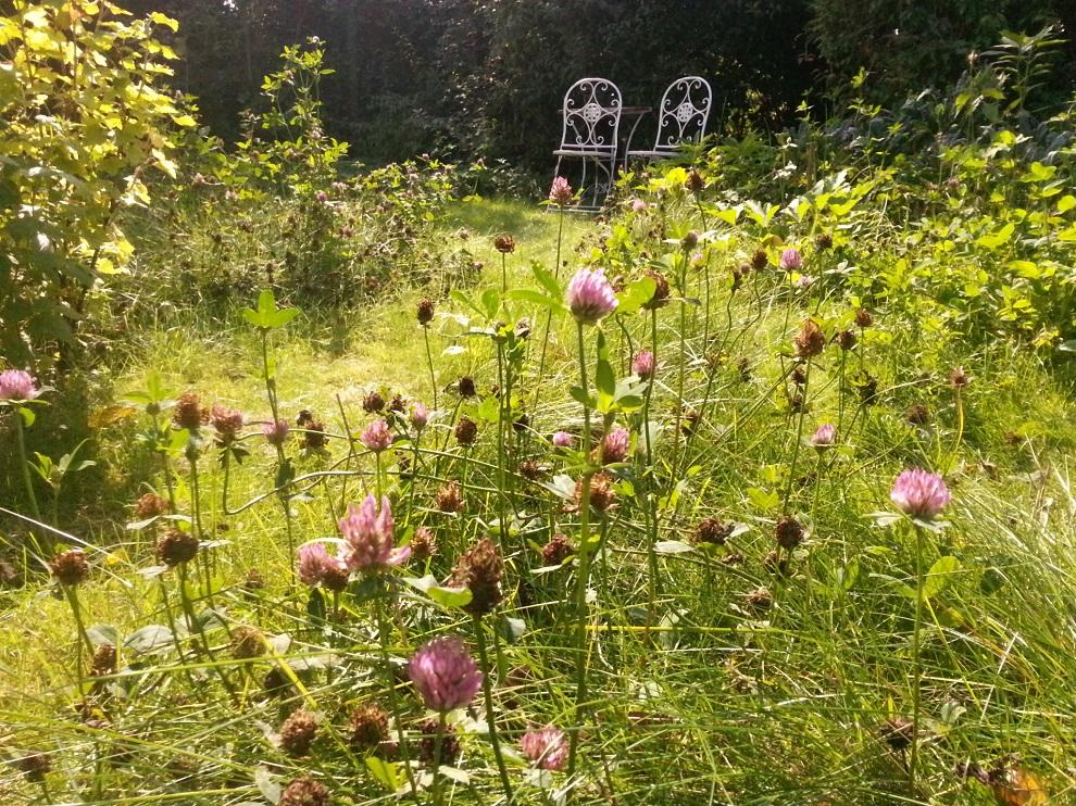 Die verschiedenen Schmetterlingsblütler - wie hier der Rotklee - versorgen im Permakulturgarten den Boden mit Stickstoff, einem der Hauptnährstoffe der Pflanzen. Kunstdünger benutze ich nicht, dafür dürfen verschiedene Kleesorten, Lupinen und Luzerne aussamen und sich ansiedeln :-)