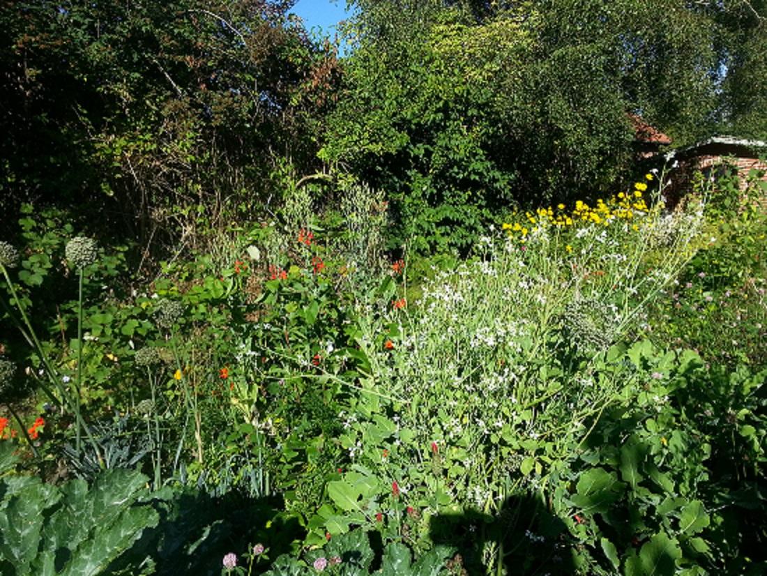 In meinem Rohkost-Permakultur-Garten ganz rechts im Hintergrund das Gebäude, in dem meine Rohkostküche für Rohkost-Kurse und andere Rohkost-Events entsteht.