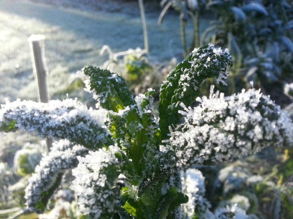 Frisches Grün mitten im dänischen Winter