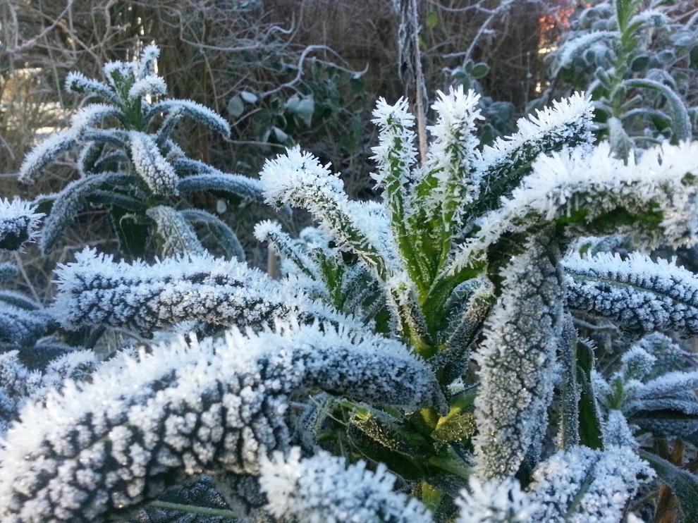 Rohkost im Winter - frisches Grün im Winter