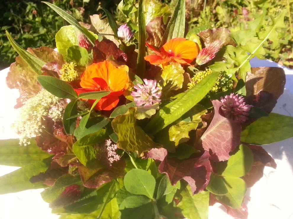 Salat und Wildkräuter pur