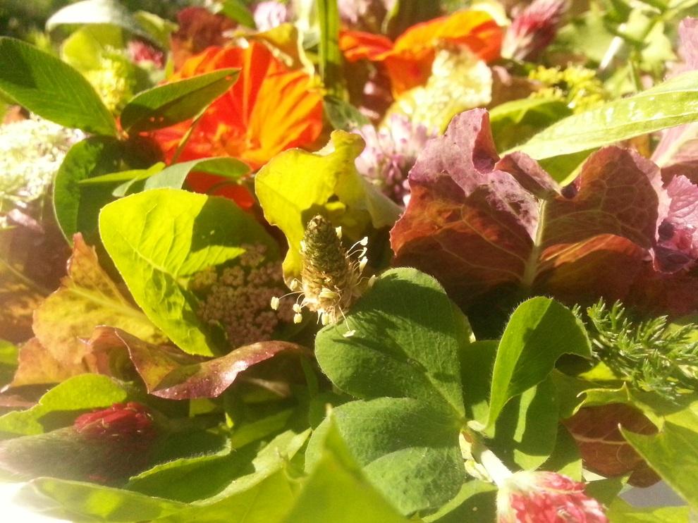 gepflückte Wildkräuter mit Salatblättern und vielleicht noch einigen essbaren Blüten - und esse die Blätter und Blüten einzeln :-)